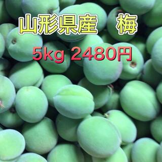 61701 山形県産 青梅 約5kg 梅 ウメ 訳ありご家庭用 品種おまかせ(フルーツ)