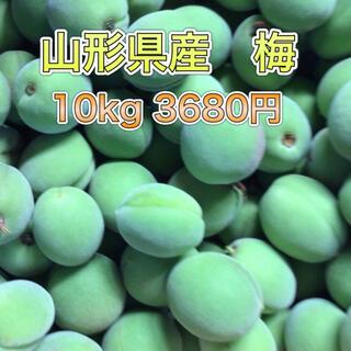 61701 山形県産 青梅 約10kg 訳あり 梅 ウメ 品種おまかせ