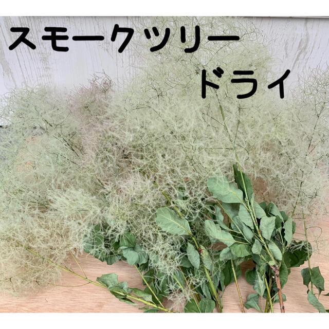 スモークツリー ドライ ハンドメイドのフラワー/ガーデン(ドライフラワー)の商品写真