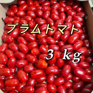 プラムトマト 3kg(フルーツ)