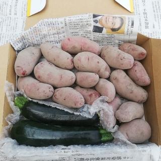 無農薬野菜 ジャガイモとズッキーニ