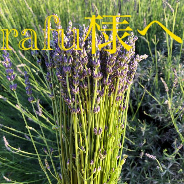 rafu様へ その1 ラベンダー 切り花 フレッシュ 200本 ハンドメイドのフラワー/ガーデン(ドライフラワー)の商品写真