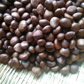 無農薬 びわの種700g 送料込み 枇杷 ビワ (フルーツ)