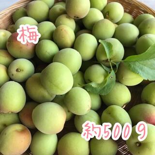 梅 ウメ うめ 約500g  梅シロップ作りなどに(フルーツ)