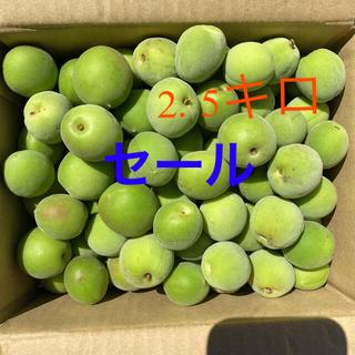 新潟県産 無農薬 藤五郎梅 2.5キロ 青梅