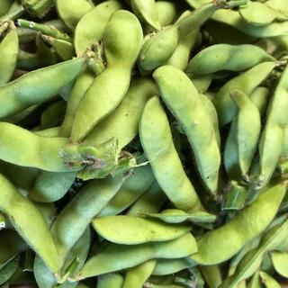 無農薬栽培 枝豆