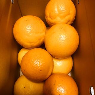 送料無料 お試し小箱 バレンシアオレンジ LL2kg 有田みかん和歌山県産贈答用(フルーツ)