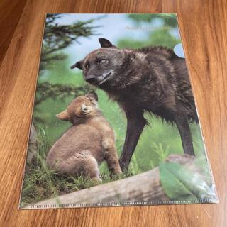 旭山動物園 クリアファイル 狼(クリアファイル)