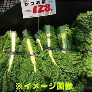 カツオ菜の種 約150粒(野菜)