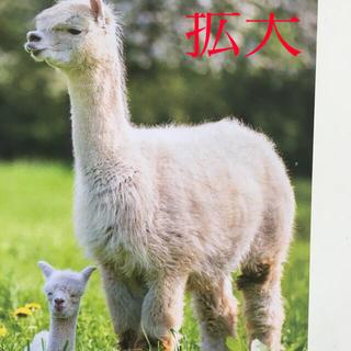 アルパカ 親子  厚労省有給休暇啓蒙チラシ  (印刷物)