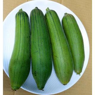 とろける食感!炒め物にも!沖縄産ヘチマ ナーベラー 1Kg コンパクトでお届け!(野菜)
