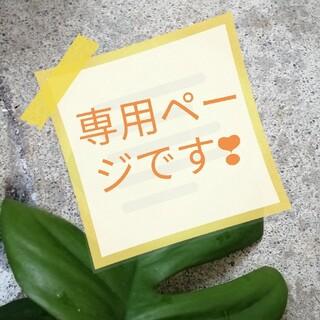 ドラゴンフルーツ 赤 45cmカット苗(その他)