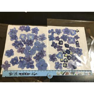 押し花 アジサイ 紫陽花(その他)