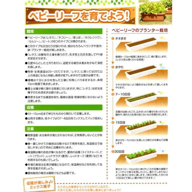 【簡単栽培‼️】ベビーリーフ菜っぱミックスの種 5ml 野菜 家庭菜園 タネ 種 食品/飲料/酒の食品(野菜)の商品写真