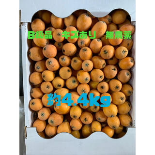 和歌山県海南市産 無農薬 茂木びわ B級品 約4.4kg
