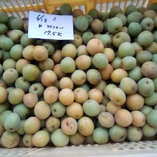 値下げ!青梅大梅10キロ。自然栽培。広島県産。産直、送込、農家直送、家庭用、(フルーツ)