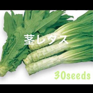 茎レタス 種30粒(野菜)