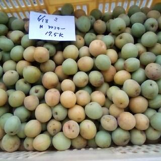 値下げ!青梅大梅5K。Mサイズ以上。自然栽培。広島県産。産直、送込、農家直送(フルーツ)