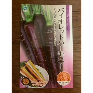 バイオレットハーモニー  紫人参(野菜)