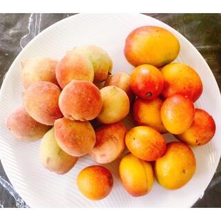 限定出品!沖縄本島産「マンゴ-と沖縄産毛桃」絶品果実セット ♪(フルーツ)