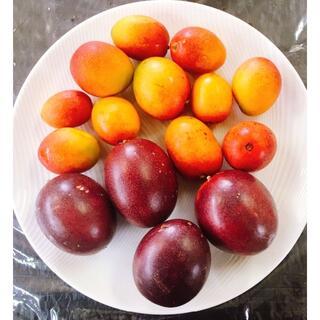 限定出品!沖縄本島産「マンゴー・パッション」初物絶品果実セット ♪(フルーツ)
