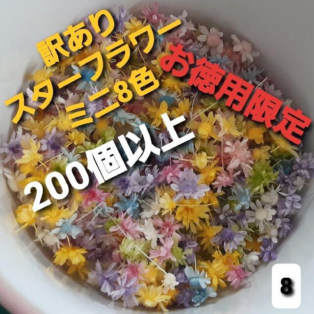 訳あり8スターフラワーミニ8色 200個以上 ハンドメイドのフラワー/ガーデン(ドライフラワー)の商品写真
