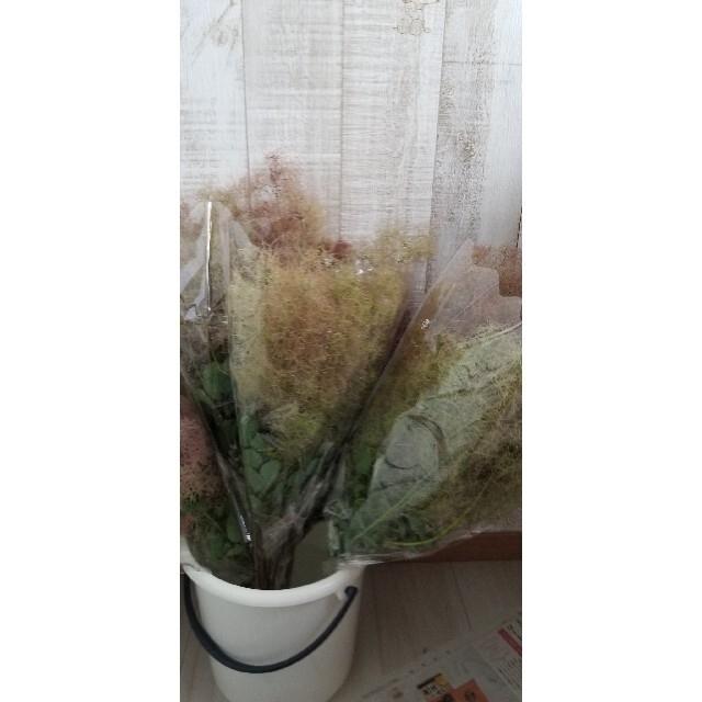 スモークツリー フレッシュ ハンドメイドのフラワー/ガーデン(ドライフラワー)の商品写真