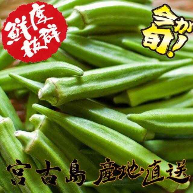 訳あり 宮古島産 オクラ 50本 食品/飲料/酒の食品(野菜)の商品写真