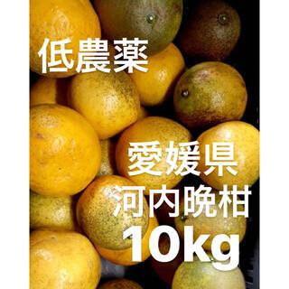 愛媛県 低農薬 宇和ゴールド 河内晩柑 10kg(フルーツ)