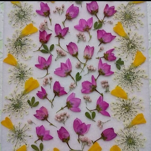 押し花 素材 オーダー 小さいビオラ バーベナ 他3点 ハンドメイドの素材/材料(各種パーツ)の商品写真
