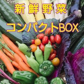 新鮮朝採り【畑〜直送便】 コンパクトBOXでお届け♪  農薬不使用