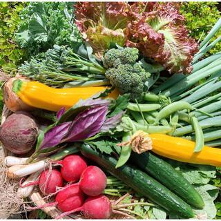 採れたてお野菜の詰め合わせ 60サイズ箱満杯詰め(野菜)