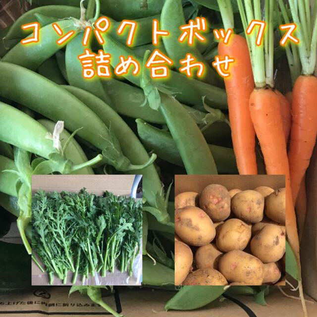 野菜 コンパクトボックス 詰め合わせ 食品/飲料/酒の食品(野菜)の商品写真
