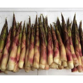 山形県産 天然月山筍 雪渓根曲 たけのこ 姫竹 お得用 1キロ以上(野菜)