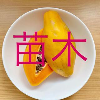 フルーツパパイヤ5cmポット入り1株   国産無農薬(プランター)