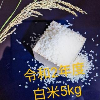 【令和2年度 白米5kg】農家のコシヒカリ