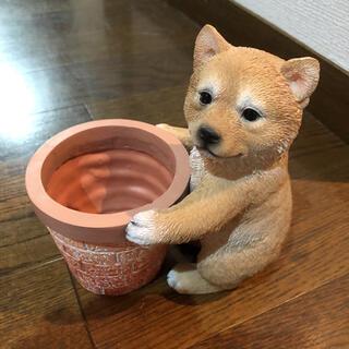 柴犬 植木鉢 プランター(プランター)