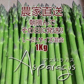 太アスパラ 1kg アスパラガス 新鮮野菜(野菜)