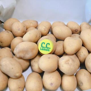 インカのめざめ 新ジャガ 無農薬 一口大 1、4キロ クロネココンパクトにて