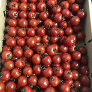 熊本県ミニトマト大粒900g