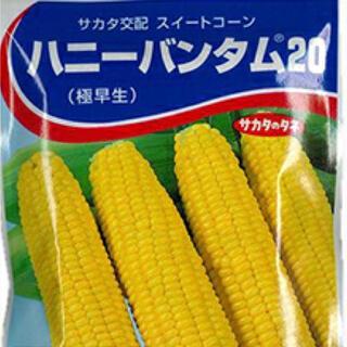 スイートコーン ハニーバンタン野菜種 10個 (野菜)