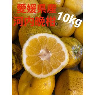 愛媛県産 河内晩柑10kg(フルーツ)