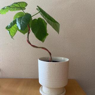 植木鉢 鉢 陶器鉢
