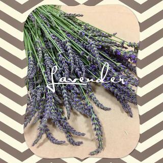 【約250本】ラベンダー Lavender ドライフラワー(ドライフラワー)