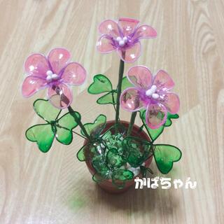 アメリカンフラワー・オキザリス【 ピンク 】(アート/写真)
