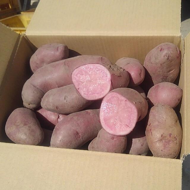 越冬貯蔵じゃがいも ノーザンルビー 食品/飲料/酒の食品(野菜)の商品写真
