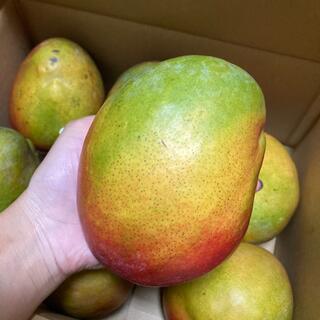 大玉 アップルマンゴー 4kg 7個入り (フルーツ)