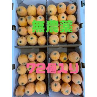 和歌山県海南市産 無農薬 茂木びわ サイズ混合約2.4kg  72個入り