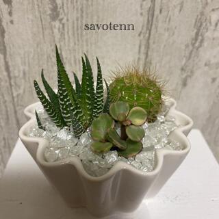 十二の巻 他 サボテン 多肉植物(ドライフラワー)