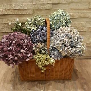 特大紫陽花 自然色 ハイドランジア☆ゼブラフラミンゴ等  ドライフラワー 8本(ドライフラワー)